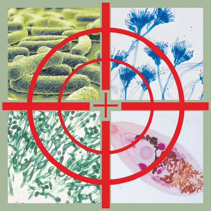 Это изображение имеет пустой атрибут alt; его имя файла - bakterii.jpg